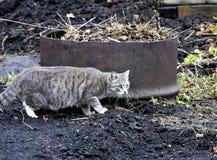 猫狩猎鸟 免版税库存照片