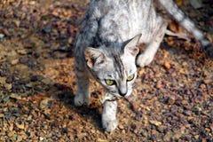 猫狩猎 免版税图库摄影