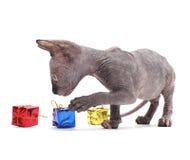 猫狮身人面象 库存图片