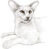 猫狮身人面象 免版税库存照片