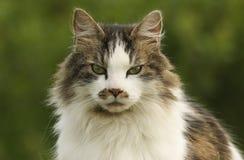猫猫属catus的顶头射击 库存照片