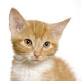 猫猫 免版税库存照片