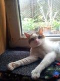 猫猫yubi 免版税库存图片