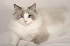 猫玩偶旧布 免版税库存图片