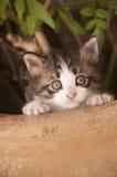 猫甜点 免版税库存图片