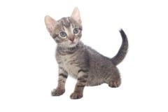 猫甜的一点 免版税图库摄影
