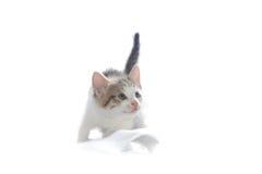 猫甜的一点 免版税库存图片