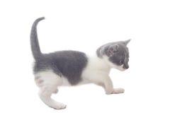 猫甜的一点 库存照片