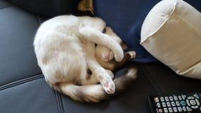 猫生活 免版税库存图片