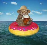 猫用在可膨胀的圈子的啤酒 库存照片
