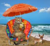 猫用在太阳懒人的汁液 免版税库存图片