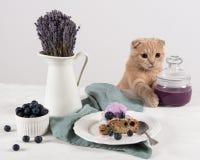 猫用在瓶子的蓝莓果酱,蓝莓自创蛋糕和在白色背景的淡紫色花束裁减与冰淇淋球的 免版税图库摄影