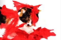 猫用羽毛装饰的红色 免版税库存图片