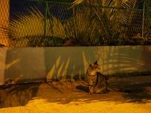 猫画象夜 库存照片