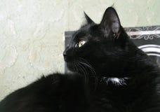 猫画象,被转动的猫  免版税图库摄影