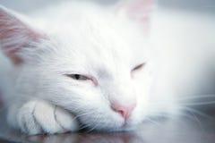 猫疲倦了 免版税库存图片