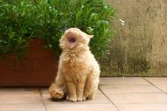 猫疲倦了 免版税库存照片