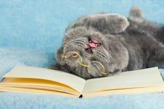 猫疲倦于工作 免版税库存照片