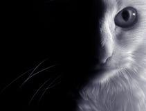 猫白色 库存照片