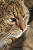 猫的一好的protret 免版税库存照片