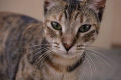 猫的可疑神色 免版税库存图片