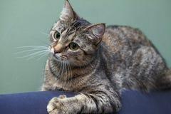 猫的情感 免版税库存照片