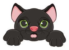 猫的惊奇面孔 库存图片