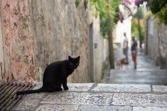 猫的照片在巴尔干镇的街道上的 免版税库存照片