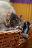 猫的爪子 免版税库存图片