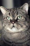 猫的眼睛…. 库存照片