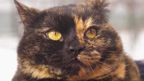 猫的纵向 股票录像