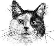 猫的纵向 免版税库存图片