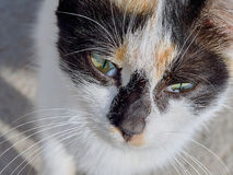 猫的纵向 库存照片