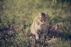 猫的葡萄酒照片 免版税库存照片