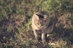 猫的葡萄酒照片 免版税图库摄影