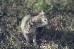 猫的葡萄酒照片 库存图片