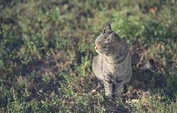 猫的葡萄酒照片 库存照片