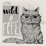 猫的逗人喜爱的画象 免版税库存图片