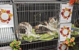 猫的陈列和发行从风雨棚的 免版税图库摄影