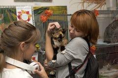 猫的陈列和发行从风雨棚的 库存照片