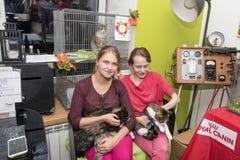 猫的陈列和发行从风雨棚的 库存图片
