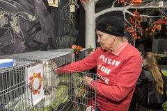 猫的陈列和发行从风雨棚的 免版税库存照片