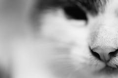 猫的顶头特写镜头的黑白照片 免版税库存图片