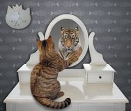 猫看他滑稽的反射 免版税库存照片