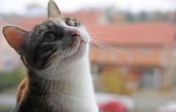 猫看天空 免版税库存照片