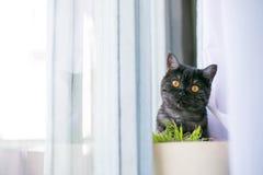 猫看掩藏起来,惊奇,寻找阳光 免版税库存图片