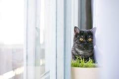 猫看掩藏起来,惊奇,寻找阳光 库存照片