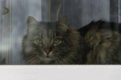 猫看窗口 免版税库存图片
