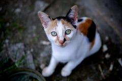 猫看见照相机 库存照片