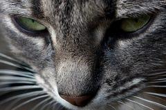 猫看 免版税库存图片